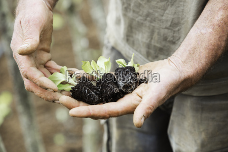 a person holding seedlings with developing