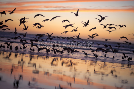 flock of birds flying over a