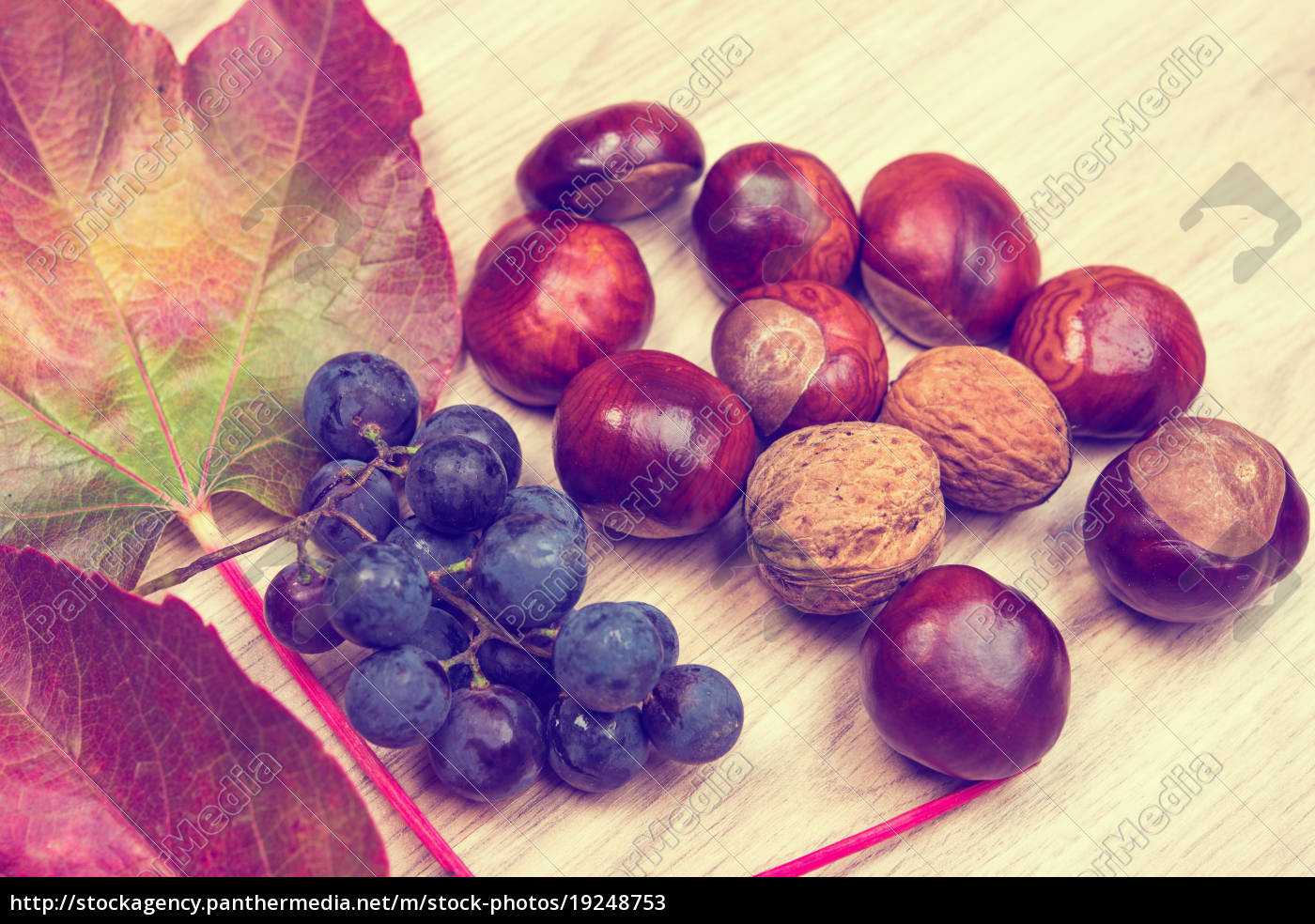 grapes, , leaves, , chestnut, and, walnut, , on - 19248753