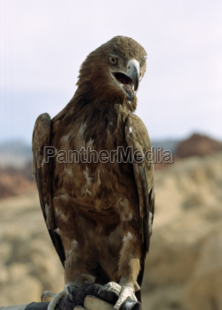 bird of prey perched on a