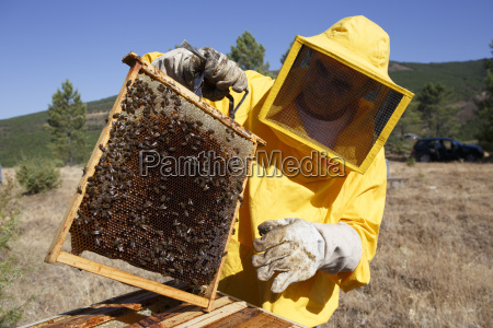 beekeeper in protective suit holding frame