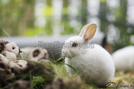 little hare in enclosure