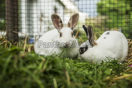 two rabbits in a cage on