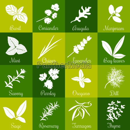 herbs hand drawn vector big icon