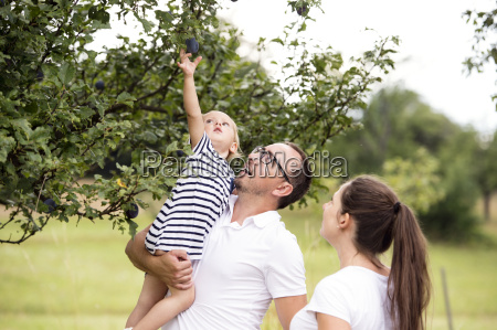 little girl reaching for plum in