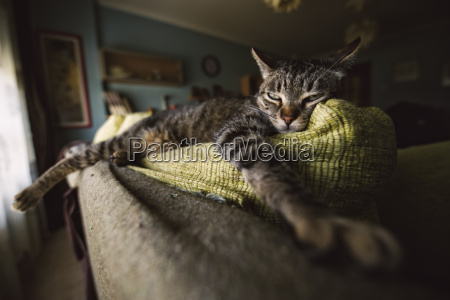 tabby cat relaxing on couch