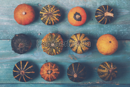 rows of ornamental pumpkins on blue