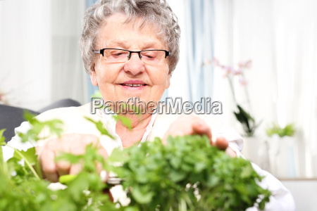 growing herbs at home green parapet