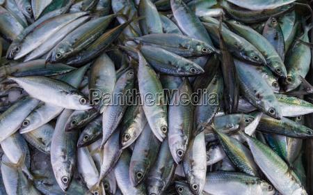 fish at the fish market