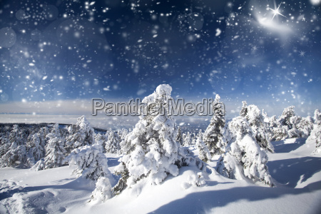 trees covered with snow in the