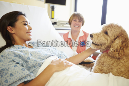 pet therapy dog visiting female patient