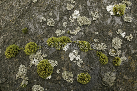plant life such as mosses and