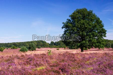 lueneburg heath