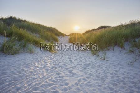 sandy path through the dunes at