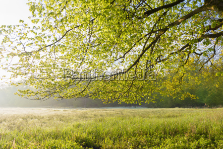 tree branch and meadow in spring