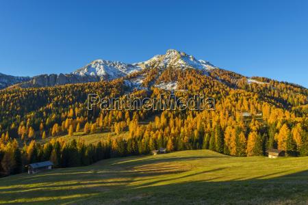 mountain with larches in autumn vigo