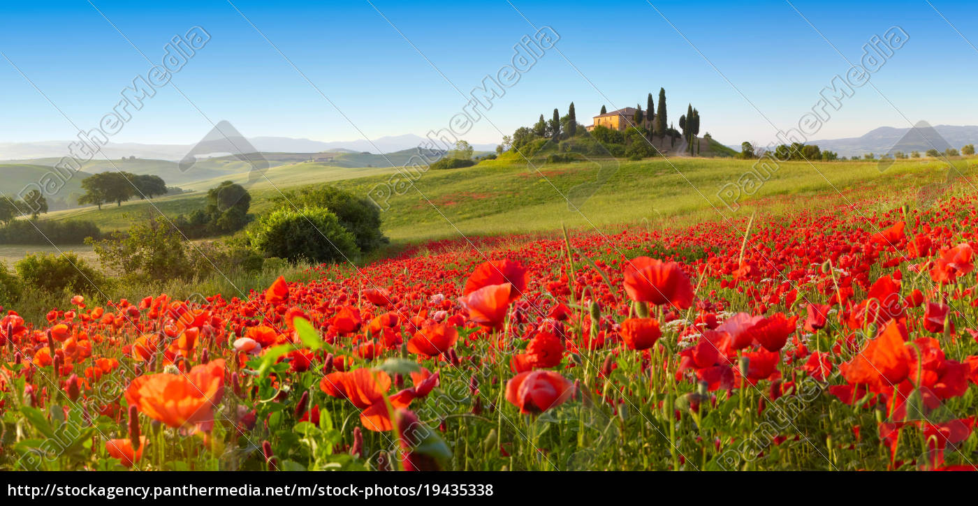 orcia, valley, in, spring - 19435338