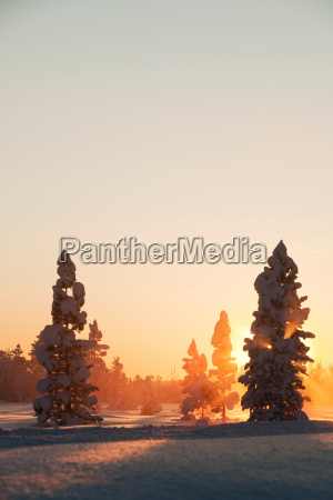 sunset over the snowy forests of