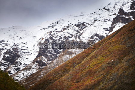 distant view of dall sheep grazing