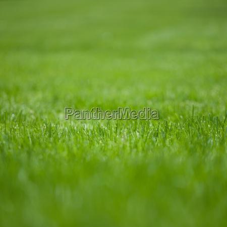 green grass full frame