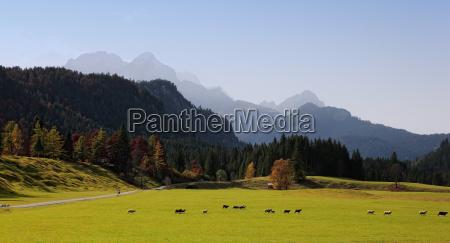bavarian alps and pasture bavaria germany