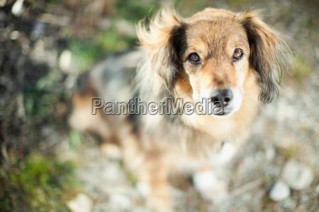 portrait of a pet dog