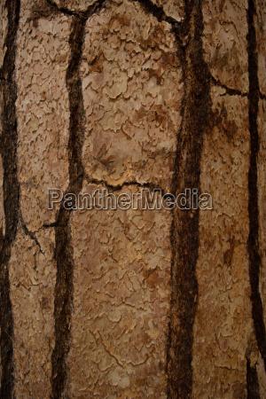 tree bark full frame