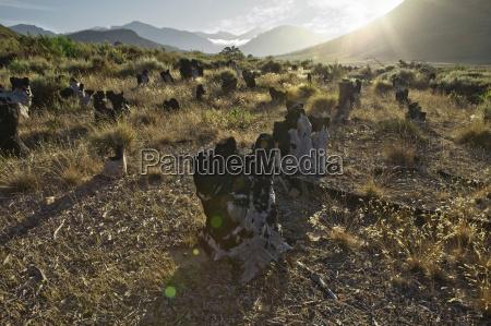 tree stumps in rural landscape