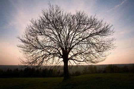 silhouette of bare tree in field