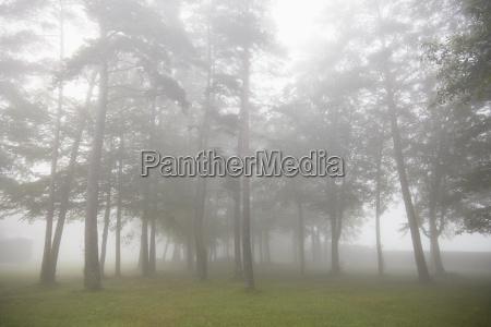 misty trees in rural landscape