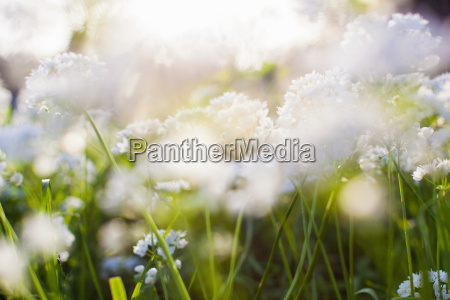 soft focus shot of flowers
