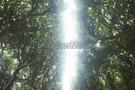 daylight through avenue of trees low