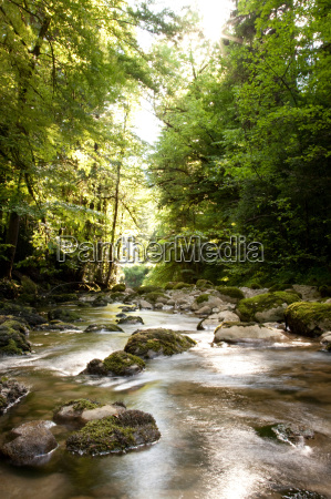 a river in the forest near