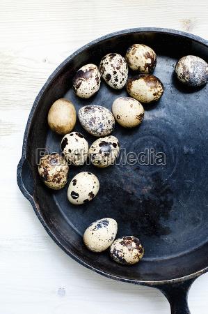 still life of fresh quails eggs