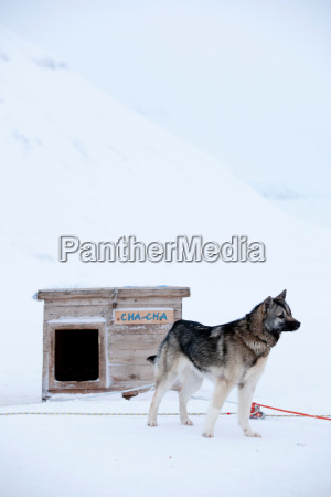 huskies kept by the crew of