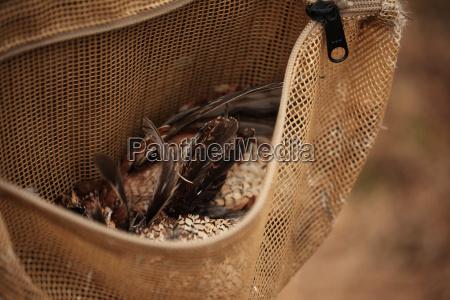 quails in hunters satchel