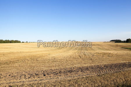 agricultural field cereals