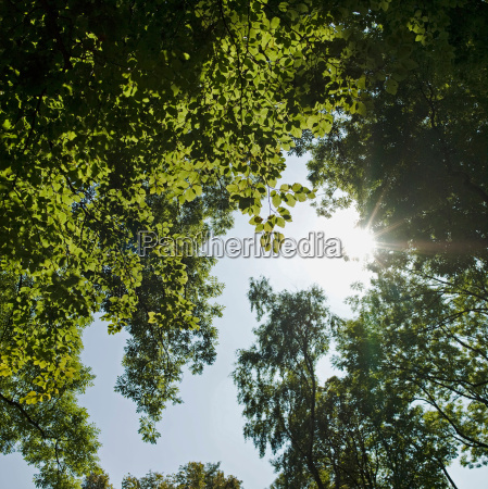 sun shinning trough leafs