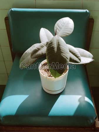 potted plant on green vinyl chair