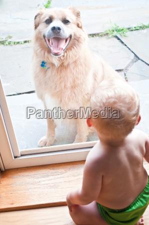 baby boy looking at pet dog