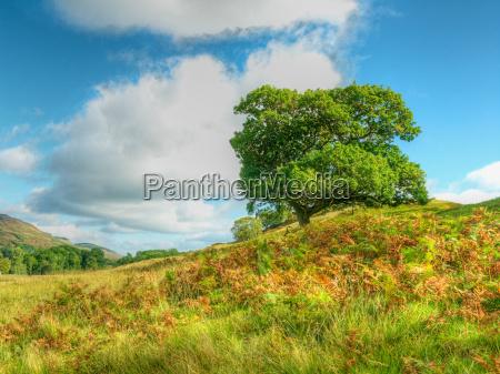 tree standing in field under blue
