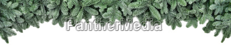 wide border for christmas fresh pine