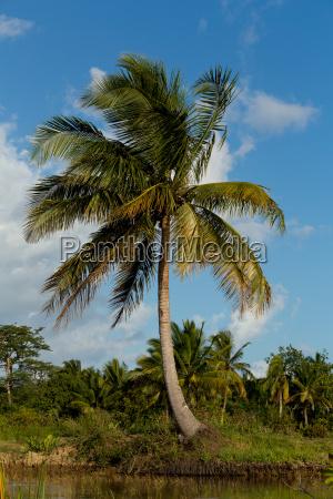 madagascar river landscape and coconut tree