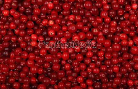 fresh red ripe cranberries background top