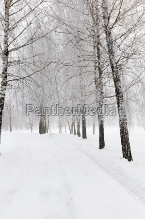 path in the snow