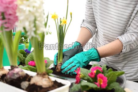 planting of plants floral composition