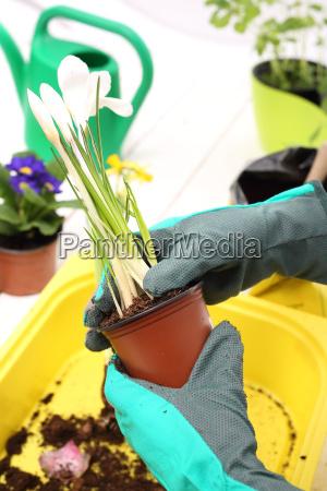 planting plants floral composition