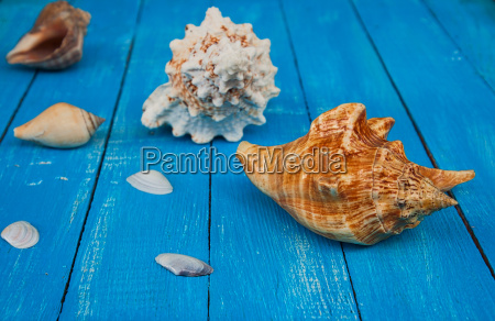 seashells on a blue wooden background