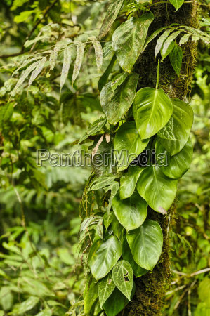 equinas rain forest costa rica