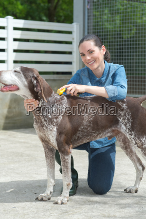 female vet stroking dog at animal